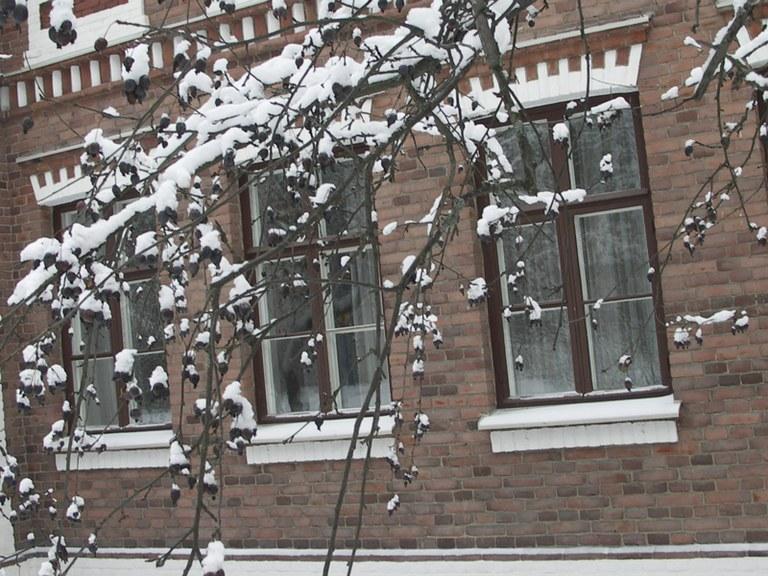 kirsi-marja nurminen talvi oppio puunoksat.jpg