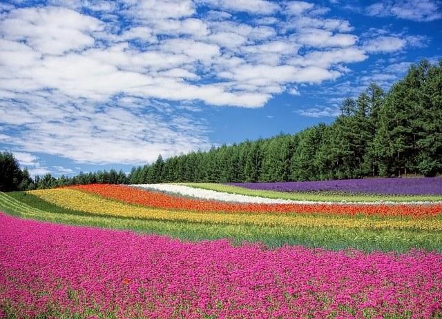 flower-field-Image by Kohji Asakawa from Pixabay.jpg
