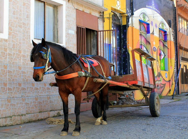 latin america horse minna sorri.jpg