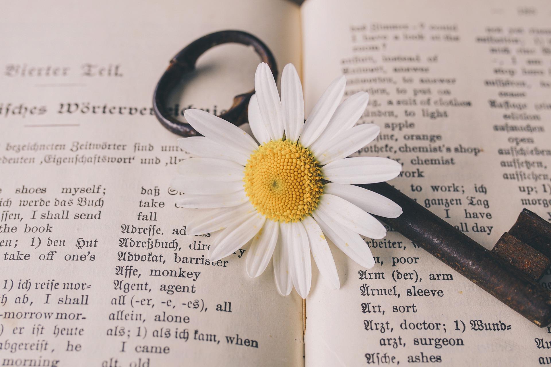 Päivänkakkara ja sanakirja, kuva Susanne Jutzeler.jpg
